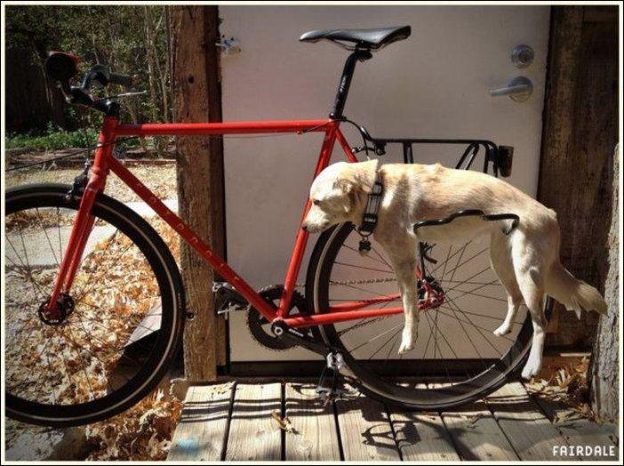Багажник для собаки