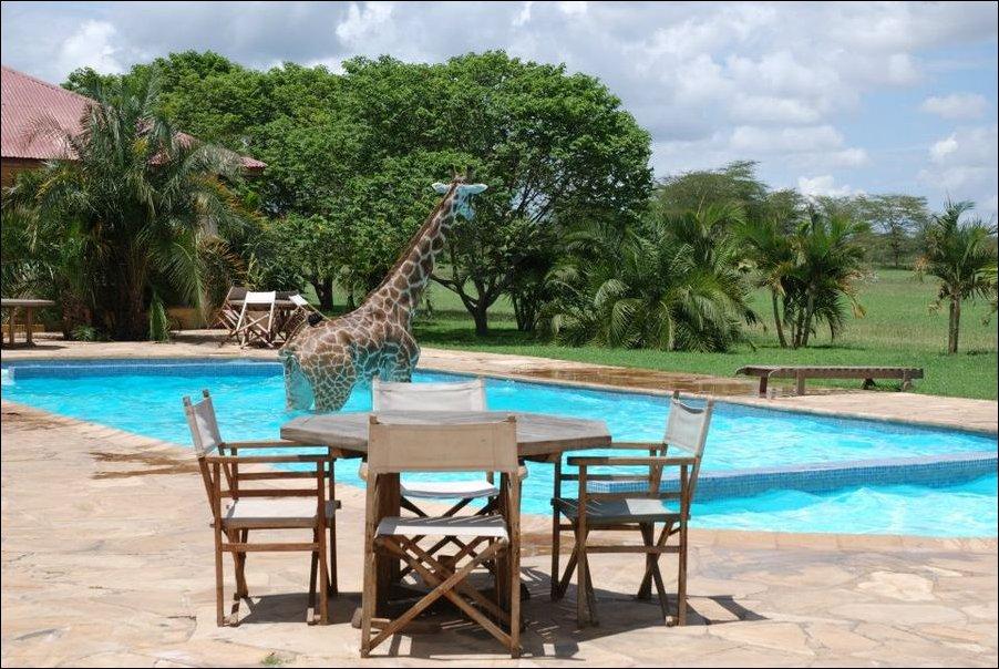 жираф в бассейне