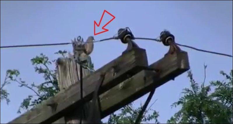 Волшебный голубь