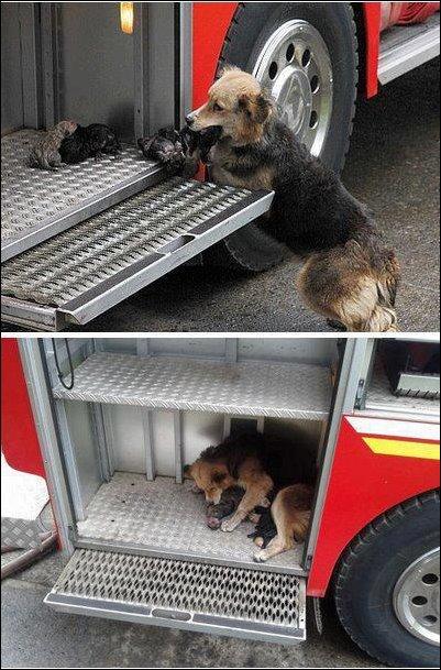Собака спасла щенят из горящего дома