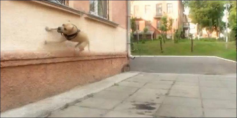 Супер-пёс