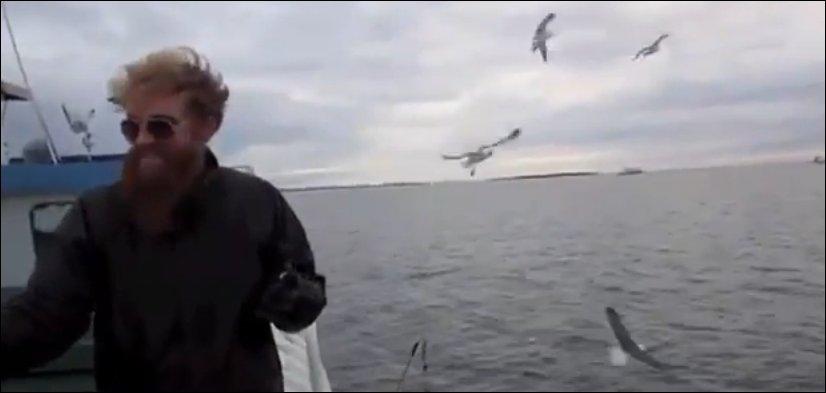 Поймал чайку голыми руками
