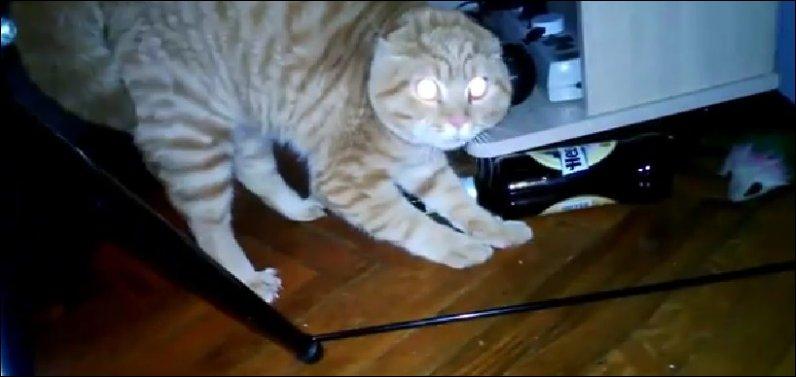 Реакция кота на букет