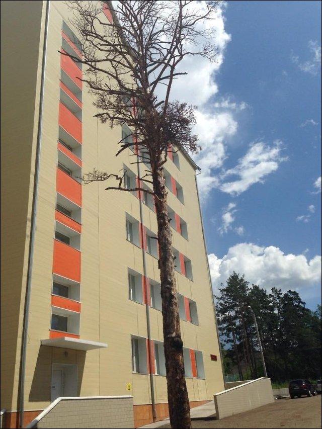 Ожившие деревья в Чите