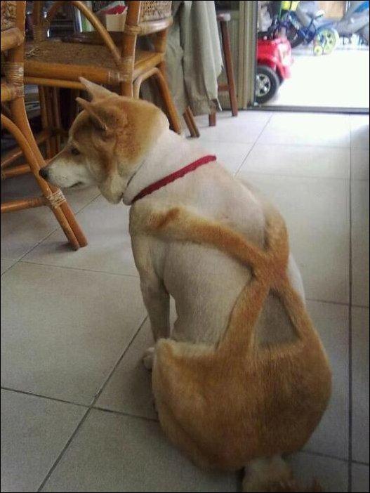 Самые безумные собачьи стрижки