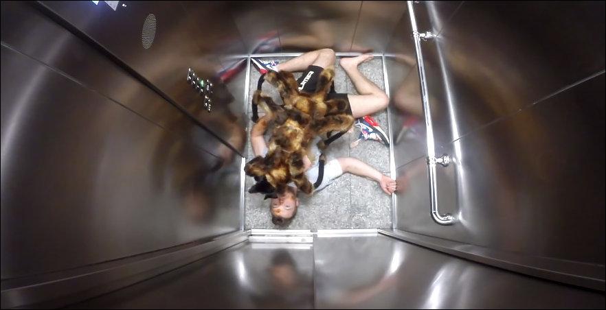 Собака-паук валидольный розыгрыш