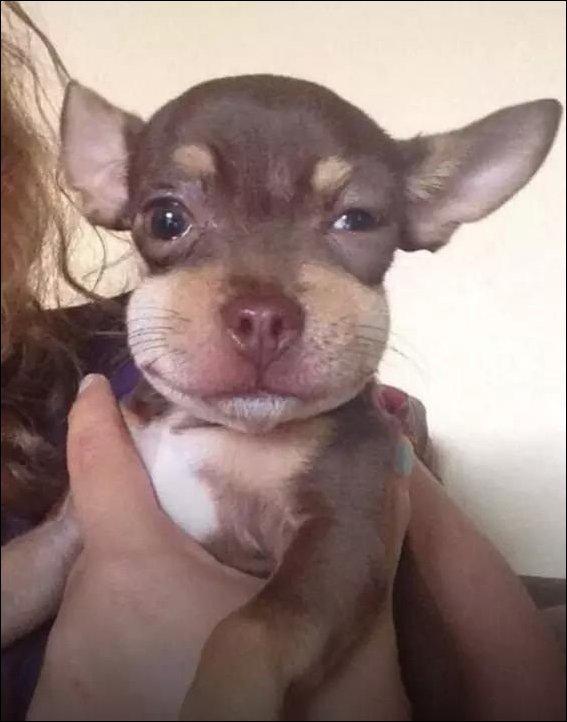 Собака покусанная пчелами