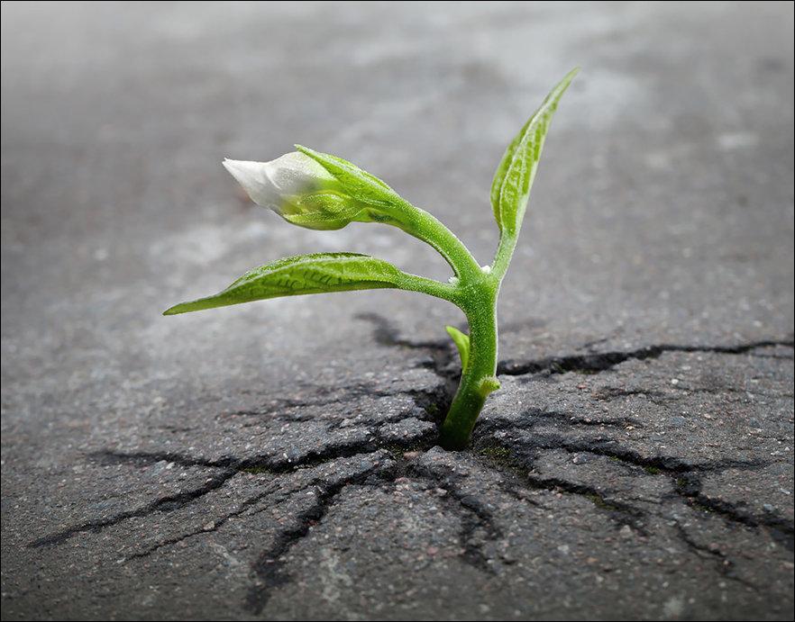Жизнь всегда находит дорогу