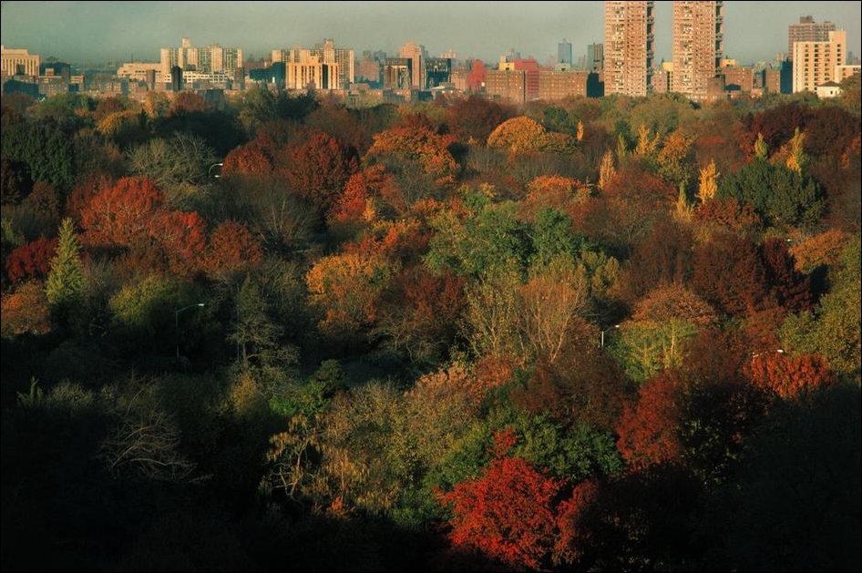 Нью-Йорк в 1983 году