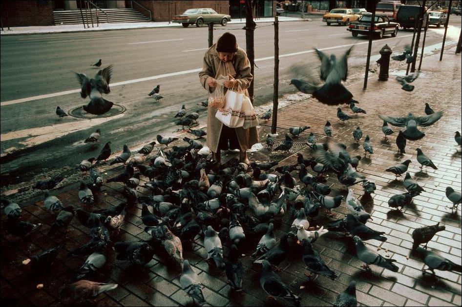 картинки старушка кормит голубей