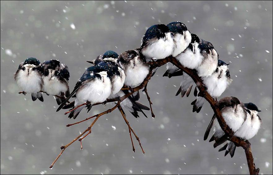 Птички греются