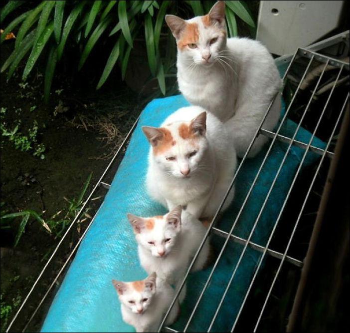 15 котов и их миниатюрных копий