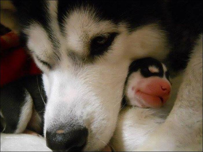 Собаки и их щенки