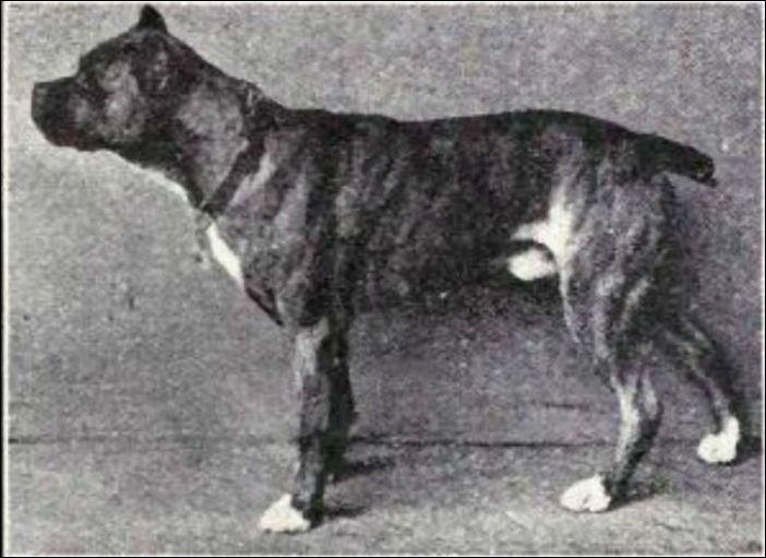 Как изменились собаки за последние 100 лет