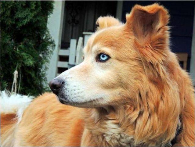 Скрещивание собак разных пород