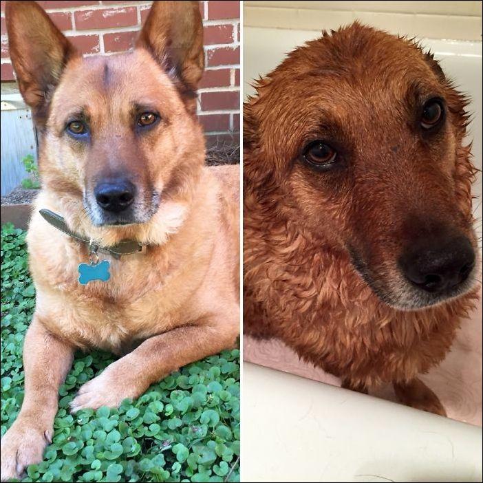 мокрые собаки