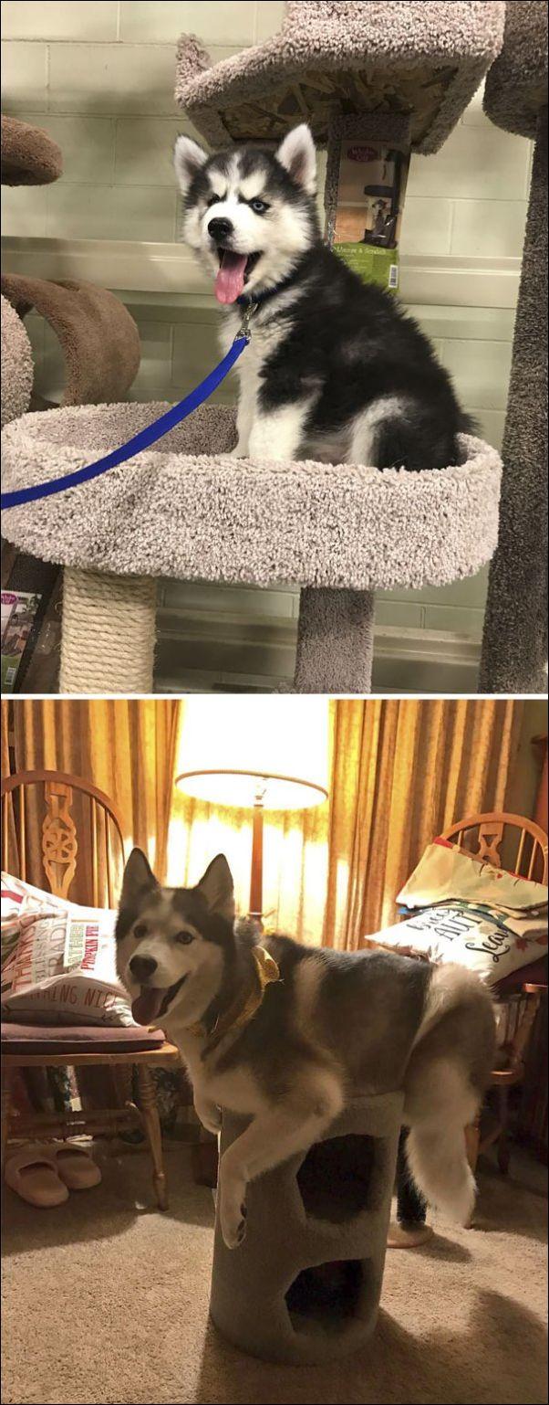 собаки ведут себя как коты