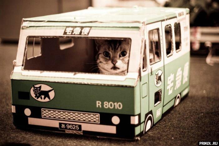 cats-03