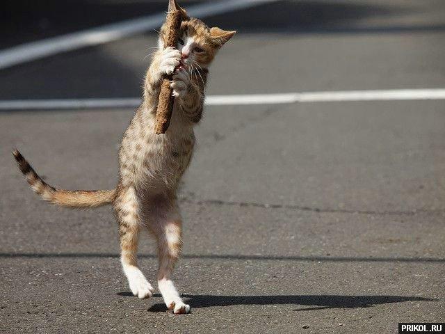 cats-07