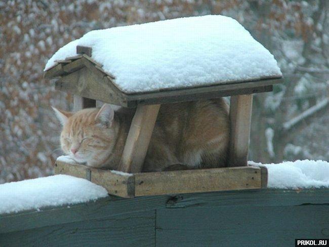 cats-09
