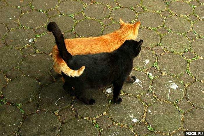 cats-10
