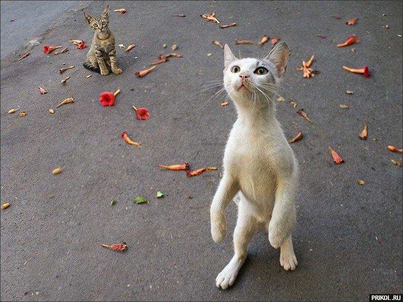 cats-14