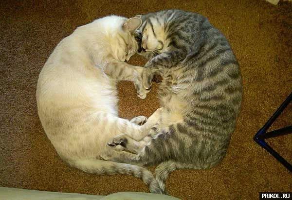 cats-16