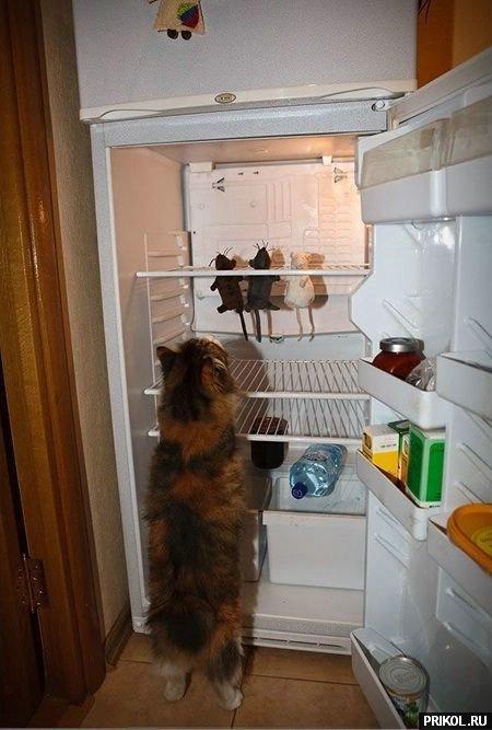 cats-21