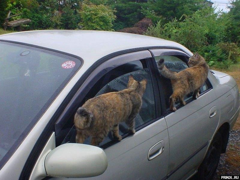cats-22