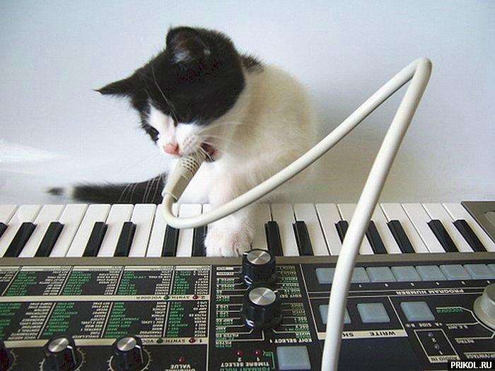 cats-27