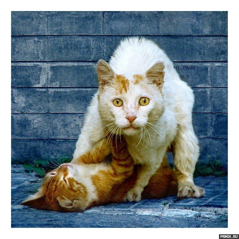 cats-30