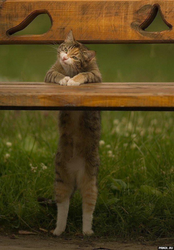 cats-31