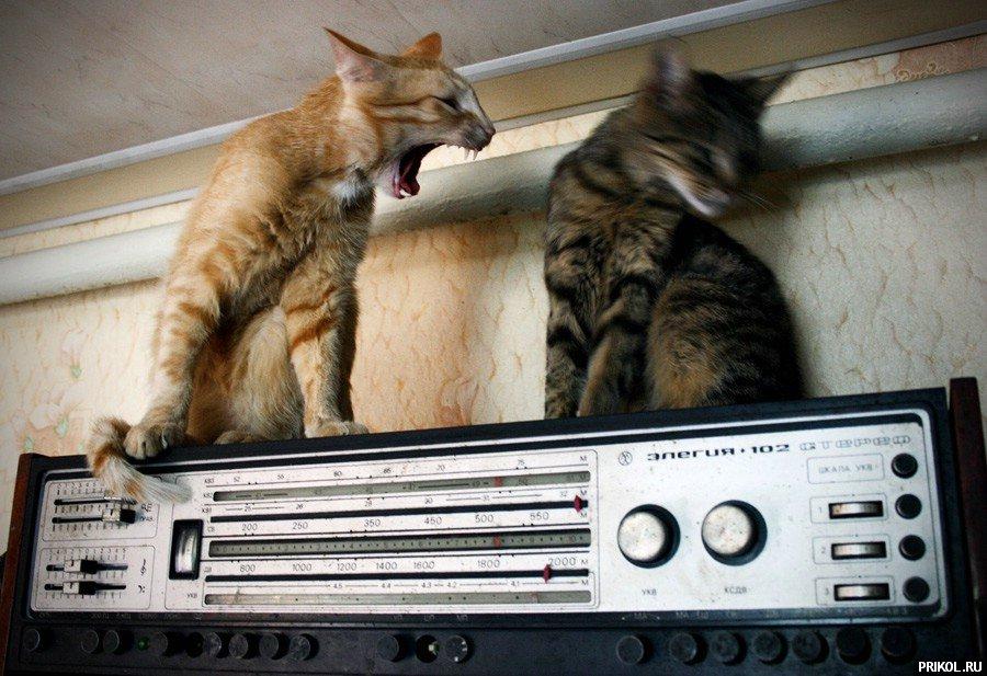 cats-33