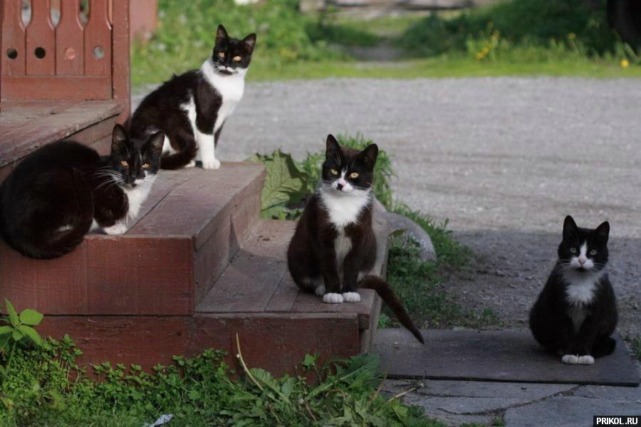 cats-34