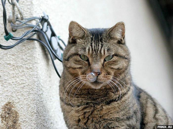 cats-36