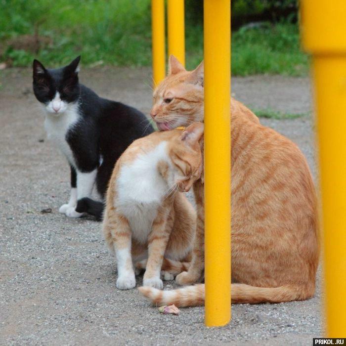 cats-39