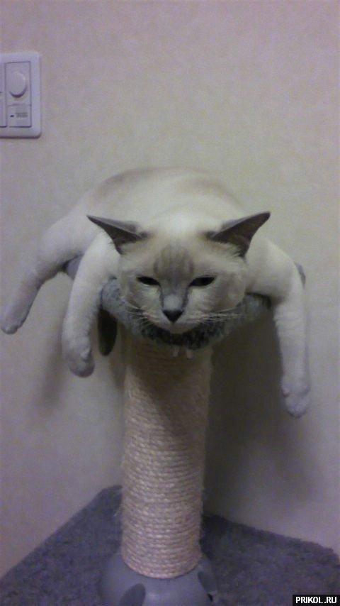 cats-40