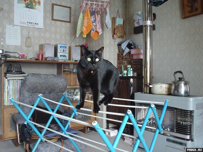 cats-41