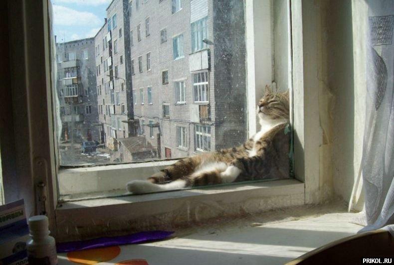 cats-43