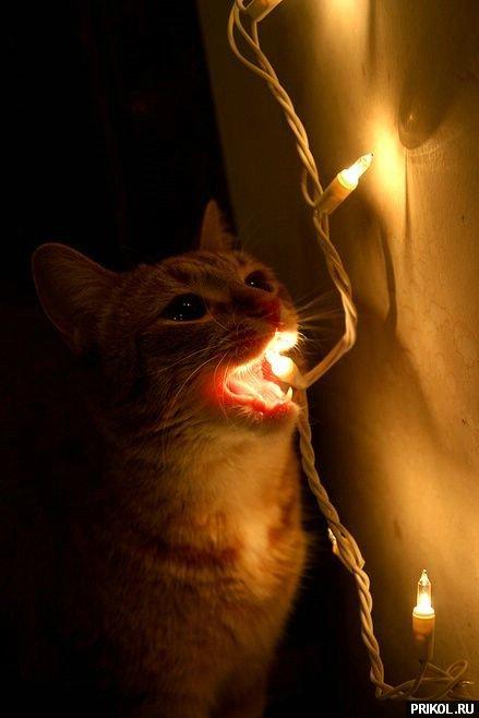 cats-49