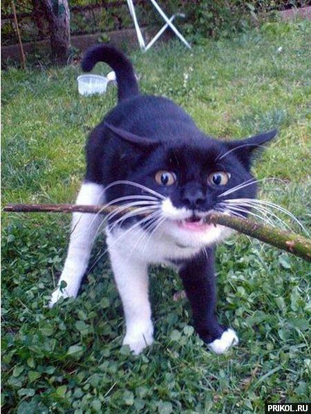 cats-51
