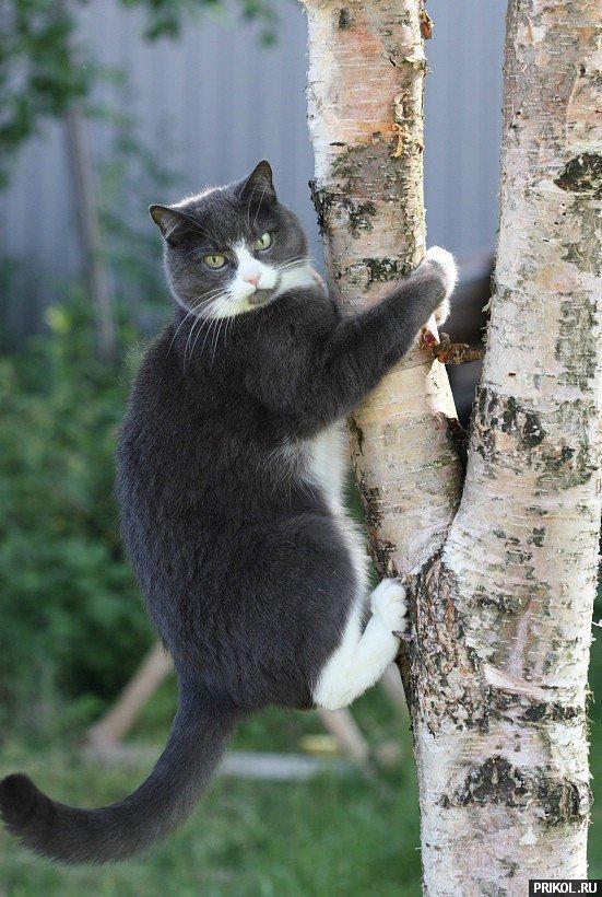 cats-54