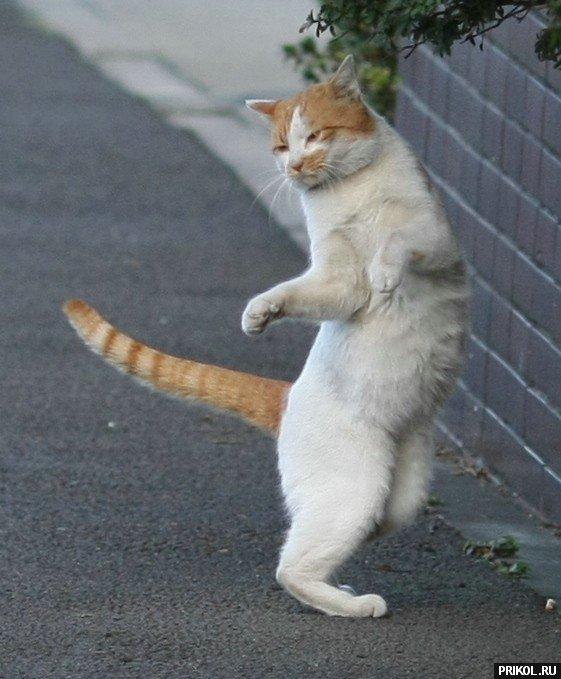 cats-57