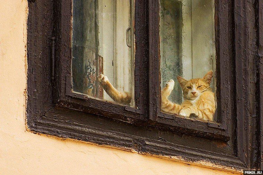 cats-61