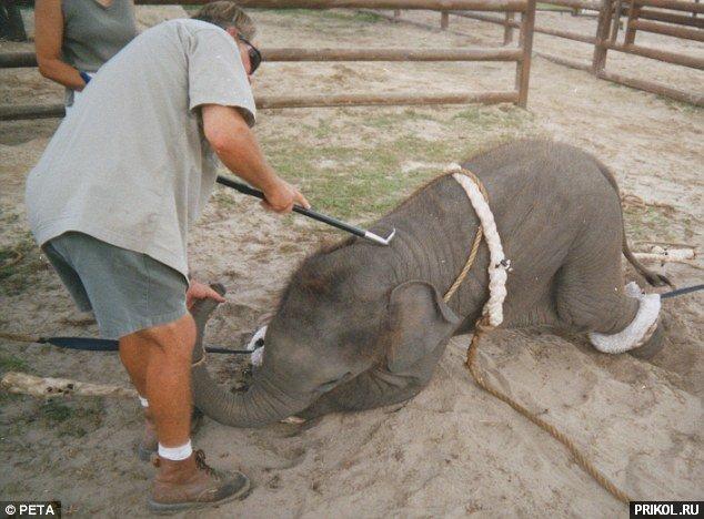 circus-elephant-01