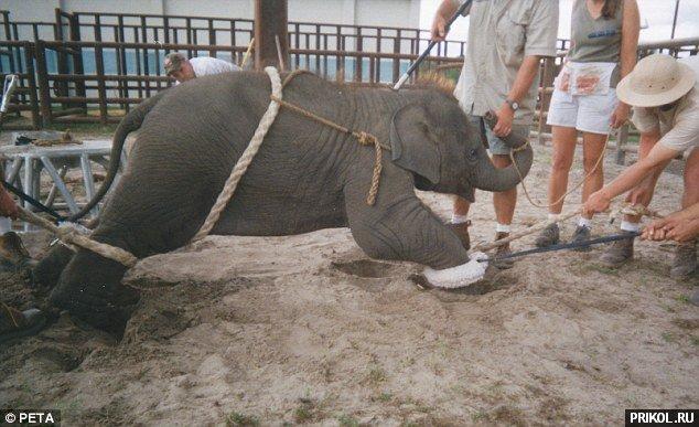 circus-elephant-02