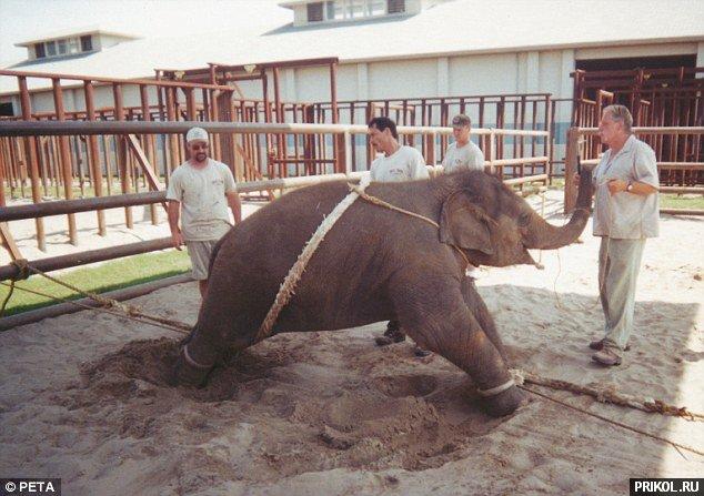 circus-elephant-03