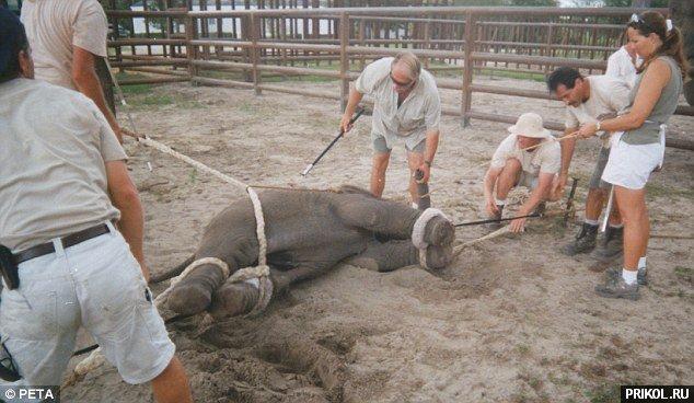 circus-elephant-04