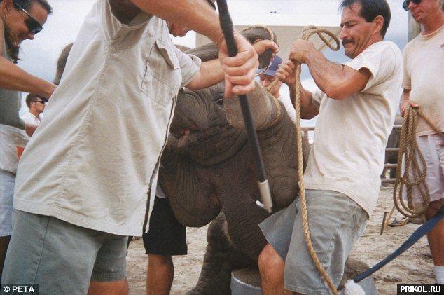 circus-elephant-05