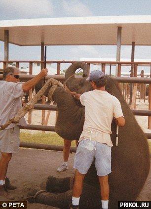 circus-elephant-06